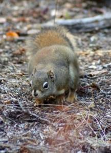 Squirrel Photo Peak Paper